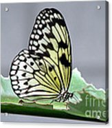 Rice Paper Butterfly On A Leaf Acrylic Print
