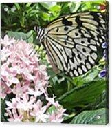 Rice Paper On Flower Acrylic Print