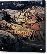 Rice Terrace Field Of Yuan Yang Acrylic Print