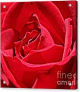 Rich Red Acrylic Print