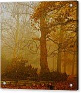 Richmond Park 11 Acrylic Print