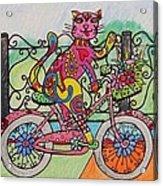 Ride Kitty Ride Acrylic Print by Carol Hamby