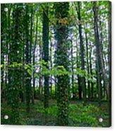 Ridgeway Trees Acrylic Print