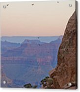 Riding The Air Currents Of The Grand Canyon Acrylic Print