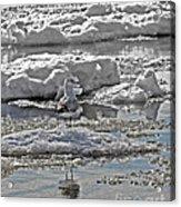 Riding The Ice Flow  Acrylic Print