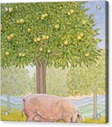 Right Hand Orchard Pig Acrylic Print
