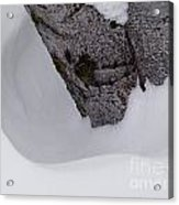 Ring Around The Tree Acrylic Print