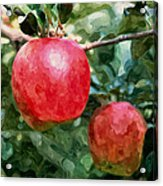 Ripe Red Apples On Tree Acrylic Print