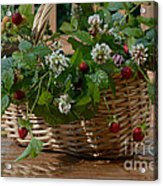 Wild Strawberries And White Clover Acrylic Print