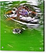 Rippled Green Acrylic Print