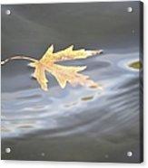 Rippled Maple Leaf Acrylic Print