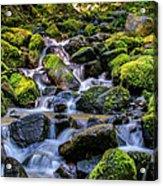 Rippling Rainforest Acrylic Print