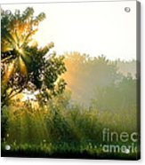 Rise And Shine Acrylic Print by Sue Stefanowicz