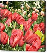 Rising Spring Acrylic Print