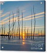 Rising Throught The Sticks Acrylic Print