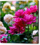 Rittenhouse Square Roses Acrylic Print