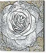 Ritzy Rose With Ink And Taupe Background Acrylic Print