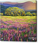 River Bank Lupines In California Acrylic Print
