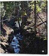 River Beneath The Trees Acrylic Print