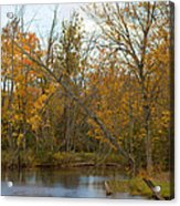 River In Autumn Acrylic Print by Rhonda Humphreys