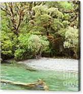 River In Rainforest Wilderness Of Fiordland Np Nz Acrylic Print