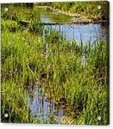 River Kennet Marshes Acrylic Print
