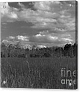 River Of Grass Acrylic Print by Andres LaBrada