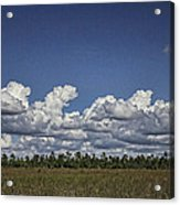 River Of Grass Acrylic Print by Anne Rodkin