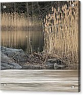 River Rock And Reeds Acrylic Print