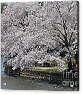 River Side  Acrylic Print