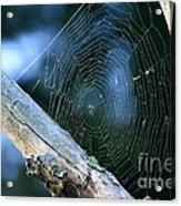 River Spider Web   Acrylic Print
