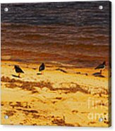 Riverbank Birds Acrylic Print