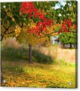 Riverbend Orchard Acrylic Print by Theresa Tahara