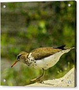 Riverside Bird Acrylic Print