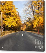 Road In Autumn Forest Acrylic Print