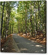 Road In Forest  Acrylic Print