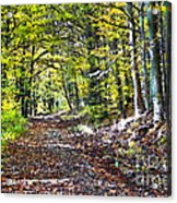Road In The Forest Acrylic Print