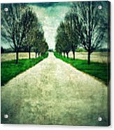 Road Lined By Trees Acrylic Print