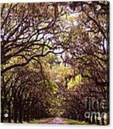 Road Of Trees Acrylic Print