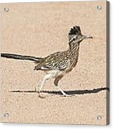 Road Runner On The Road Acrylic Print