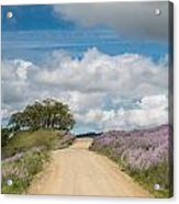 Road Through Lupine Acrylic Print