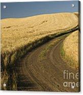 Road Through Wheat Field Acrylic Print
