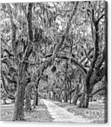Road To Dungness Acrylic Print