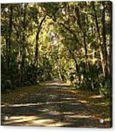 Road To The Enchanted Forest Acrylic Print