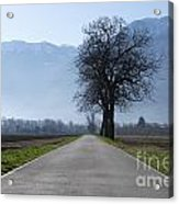 Road With Trees Acrylic Print