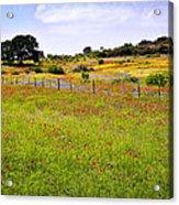 Roadside Flowers Acrylic Print by Tamyra Ayles