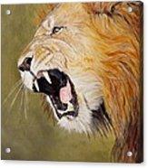 Roar Acrylic Print