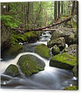 Roaring Brook Acrylic Print by Patrick Downey