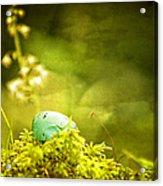 Robin's Egg On Moss Acrylic Print