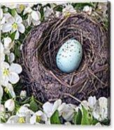 Robin's Nest Acrylic Print